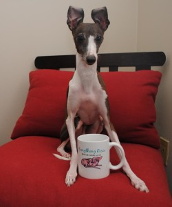 Antonio the Italian Greyhound Ear poppin' excitement! Look what came in the mail today! Did you get yours????