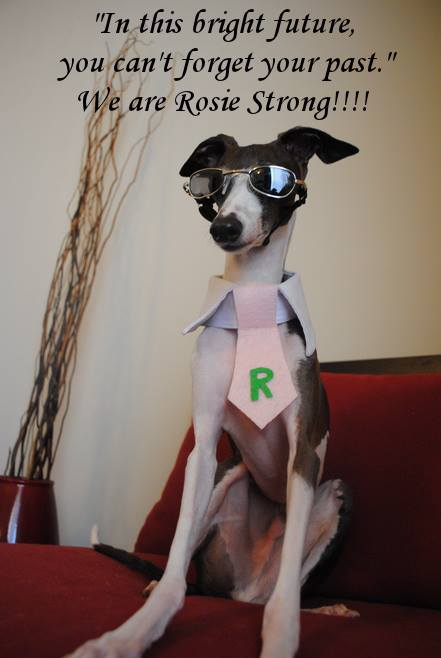Antonio the Italian Greyhound