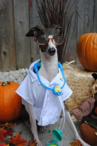 Dr. Antonio the Italian Greyhound says: he wishes he could visit Rosie and help her get well. We love you, Rosie!