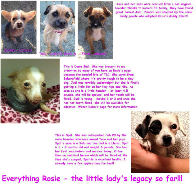 Everything Rosie - the little lady's legacy so far