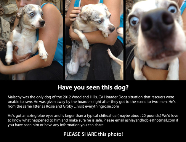 Help find Woodland Hills Hoarder Dog
