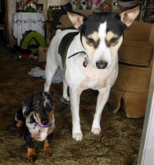 Sharkie DeVille on the right and Odie McLovin on the left. From Ukiah, California. We love you Rosie!