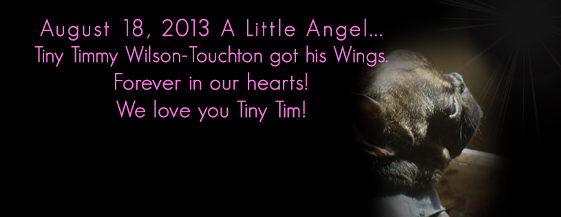 forever in our hearts tiny tim