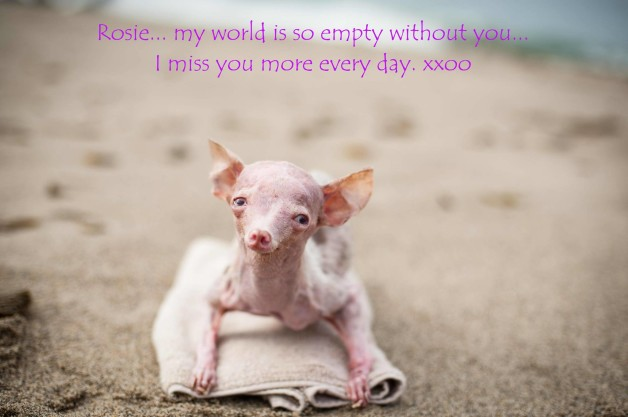 Missing rosie - two years since rescue
