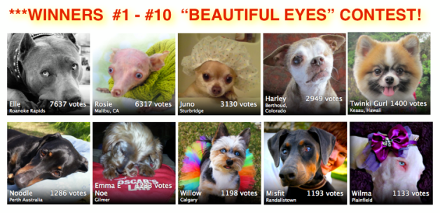 American dog magazine s 2nd annual beautiful eyes contest took