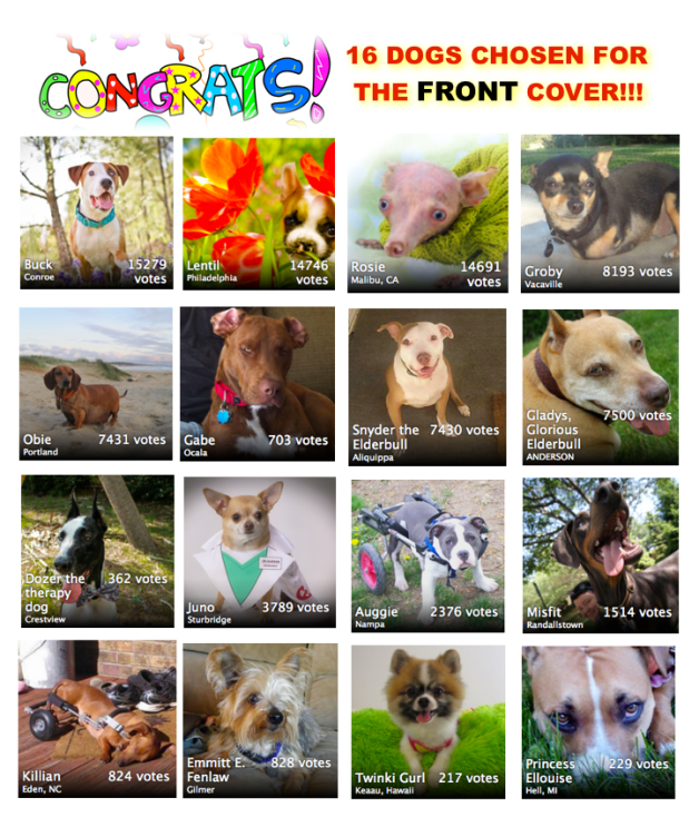 winners of 2013 American Dog Magazine cover contest